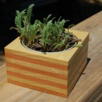 Wooden Desk Planter by Erde Designs