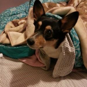 La De Blog - Tilda Blankets