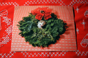Katniss Wreath 01 SMALL