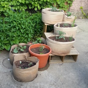 La De Blog - Container Garden in Smart Pots 2014