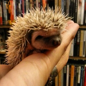 La De Blog - Art3mis 2 week old baby hedgehogs hoglets